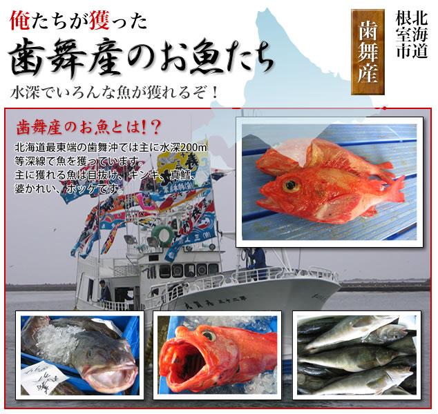北海道歯舞底刺網部会